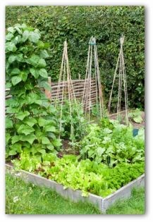 planned gardens