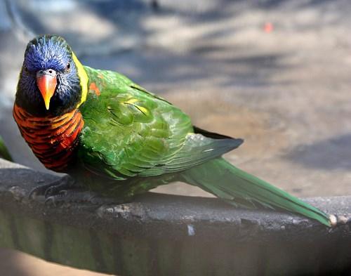 Omgeni River Bird Park Durban