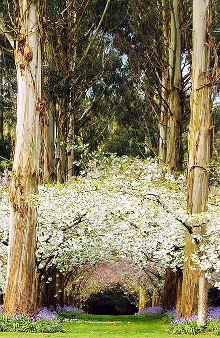 Eucalyptus Forest, New Zealand - a place to be