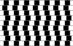 Do the straight horizontal gray lines look curvy to you? Hold up a piece of paper to prove that they are straight and parallel to each other.