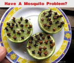 At your next outdoor gathering try this SAFE and EFFECTIVE method of keeping mosquitoes at bay! Simply slice a lime in half and press in a good amount of cloves for an ALL NATURAL mosquito repellent..